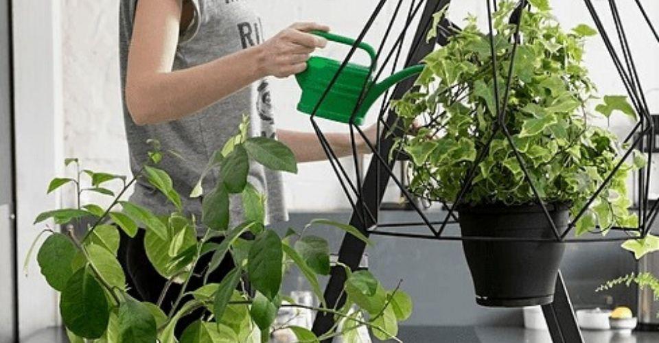 Veel planten in huis hebben is hip